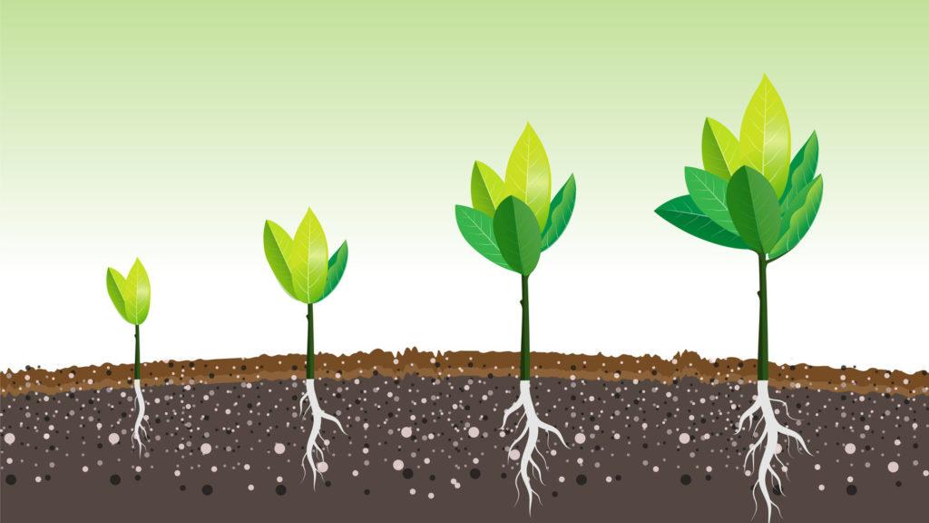 finanzas personales sostenibles